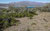 Alstroemeria patagonica
