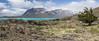 Nothofagus ? near Lago Belgrano