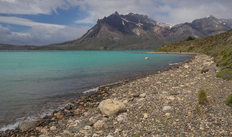 Lake margin habitat. Senecio martinensis and Oxalis loricata *