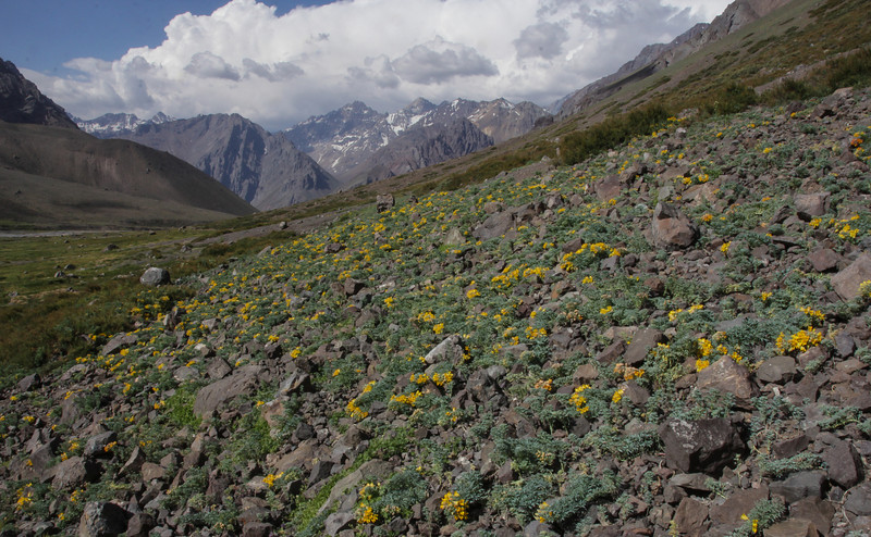 Habitat of Tropaeolum polyphyllum