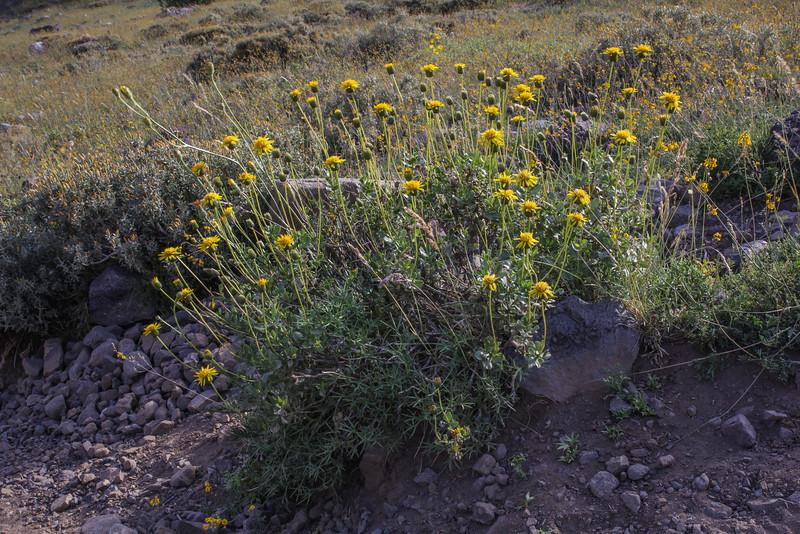 Banos Morales, Parque Nacional El Morado, Metropolitan