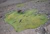 Habitat of Laretia acaulis and Oreopolus glacialis