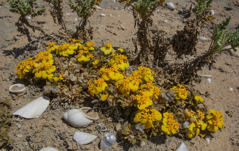 Coastal area near Choros Bay, Pacific, Coquimbo and Atacama