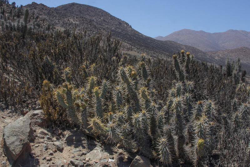 Deserts along 41 and 5 near La Serena, Coquimbo