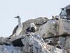 Isla Reserva Nacional Pinguino de Humboldt