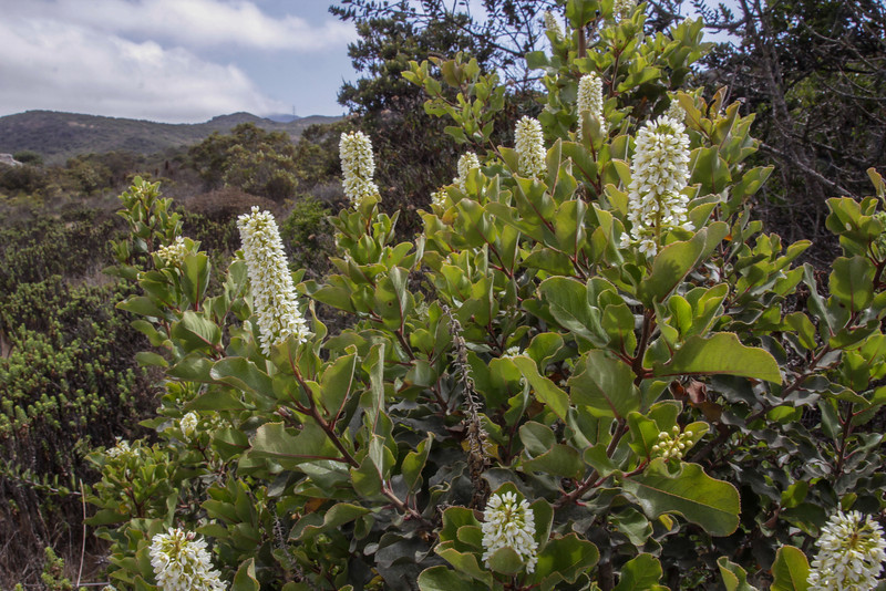 Pacific coast, near Longotoma, Valparaiso