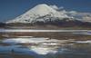 Fulica gigantea, with Parinocota Volcano 6348m
