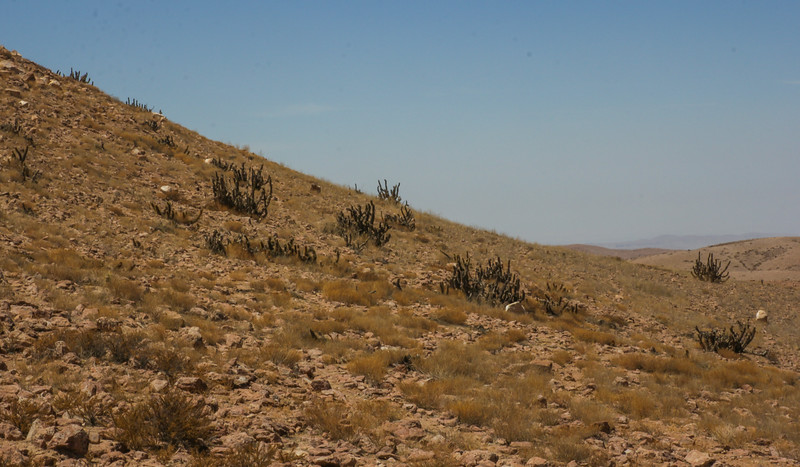 Habitat of Corryocactus brevistylus and other Cactaceae