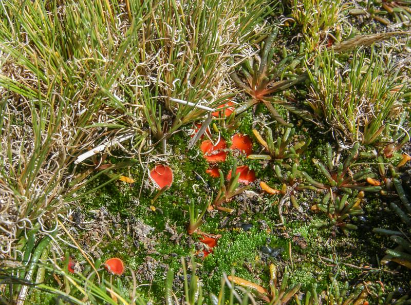 126 Fungus