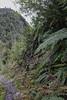 Lophosoria quadripinnata & Blechnum chilense