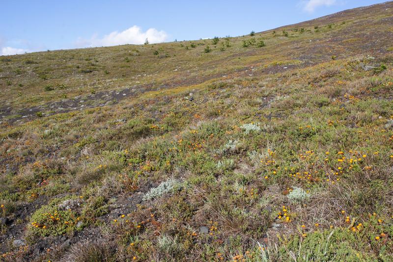 Habitat of many wild plants