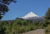 Vulcano Llaima 3125m, in front Chusquea coleou