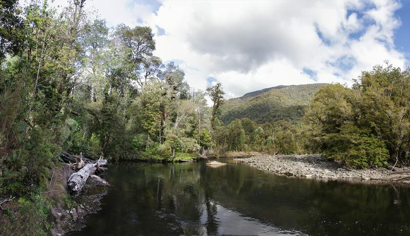Valdivian rainforest