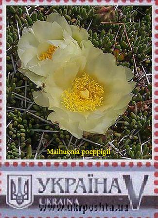 Ukraine stamp of Maihuenia poeppigii