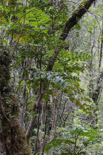 Parque Nacional Alerce Andino, Los Lagos