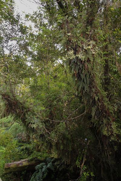 Ferns and Lichen