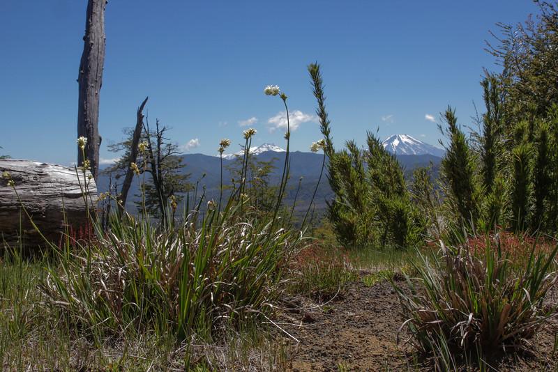 Near Vulcano Llaima 3125m, Parque Nacional Conquillio, Araucania