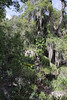 Campsite close to Parque Nacional Laguna del Laja, Bio Bio