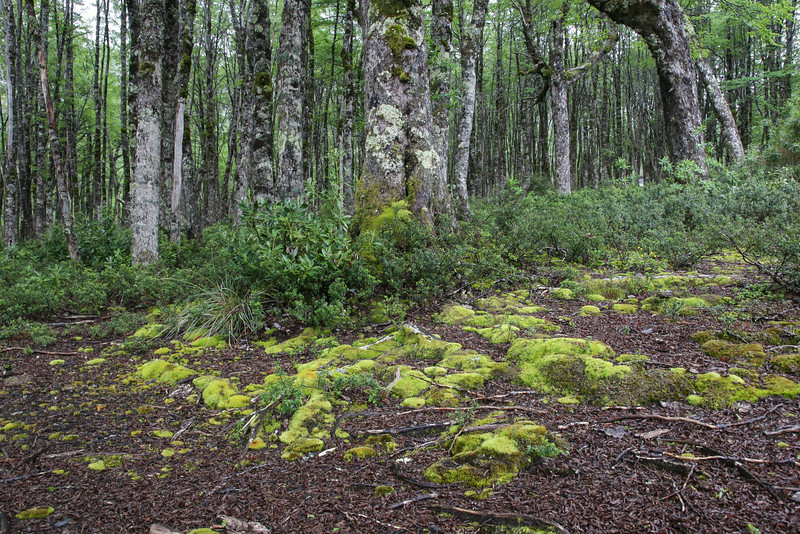 Forest floor with