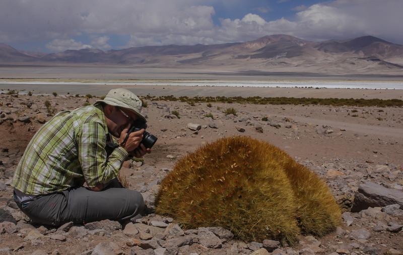 Parque Nacional Salar del Huasco, near the Bolivian border, Tarapaca