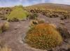 4400m, Parque Nacional Salar del Huasco, near the Bolivian border, Tarapaca