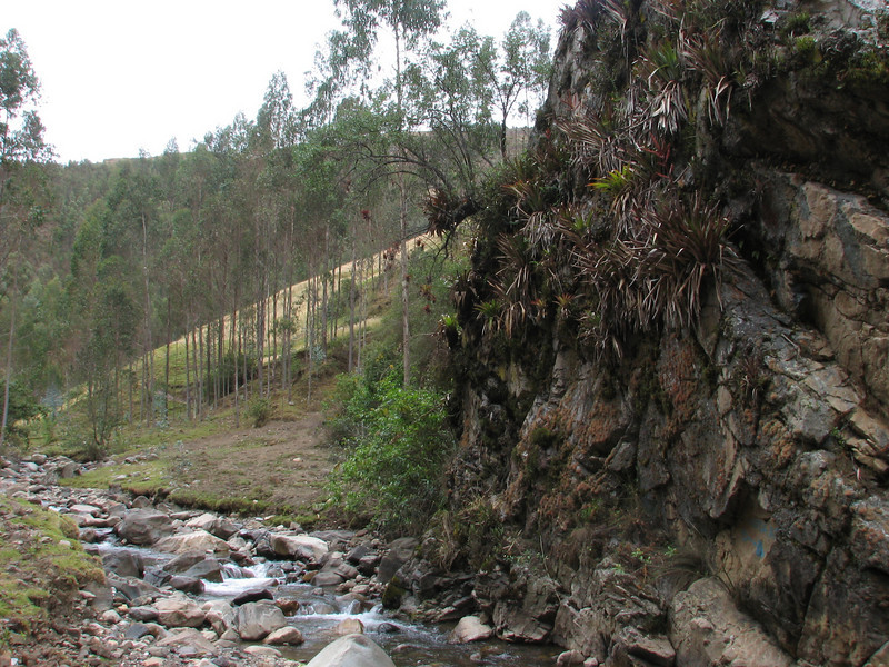 Bromelia spec. Pomabamba 2950m - Yuraj Machay 4000m