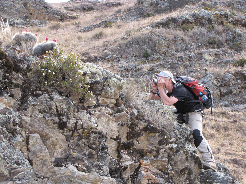 take a picture of Matucana yanganucensis (Cordillera negra)
