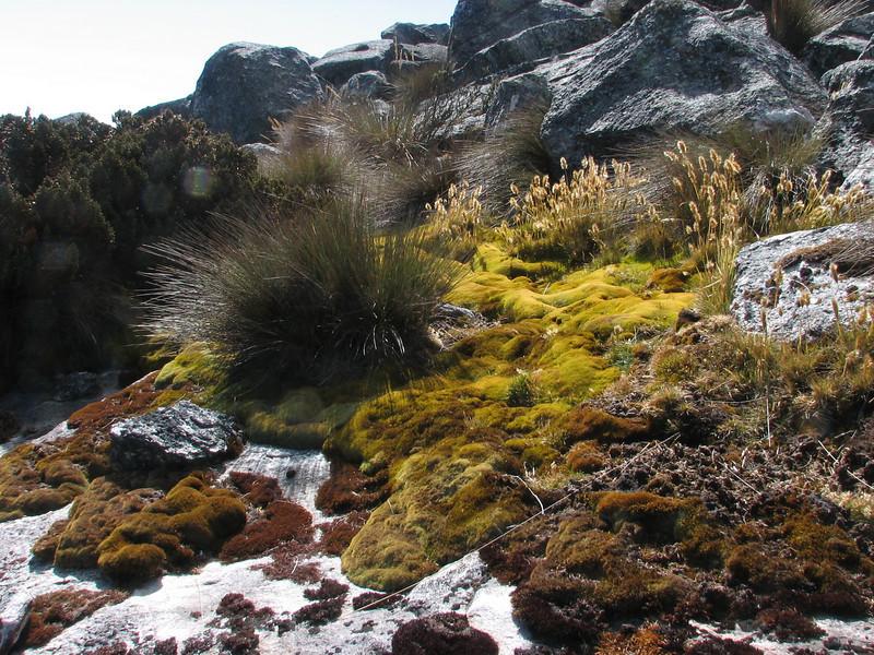 habitat with mosses