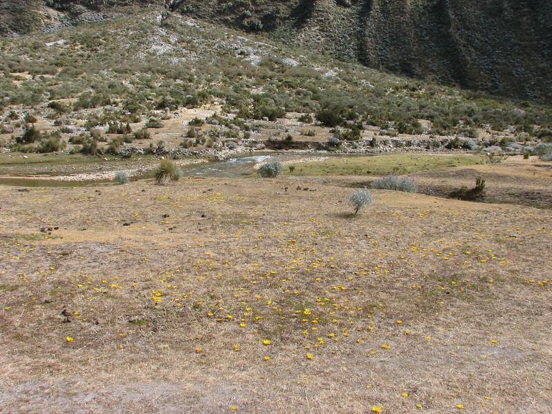 habitat of Hypochaeris echegarayi