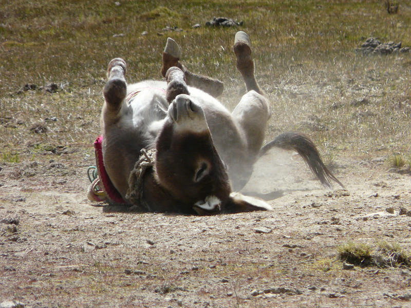 playing donkey
