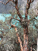 habitat Bromeliaceae, Polylepis ssp.