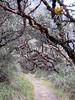 habitat Tillandsia cf. ionochroma (Identification: Walter Till, University Vienna Austria)