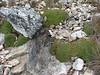 Azorella yareta, Quara Quara pass 4840m