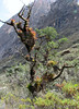 habitat Bromeliaceae