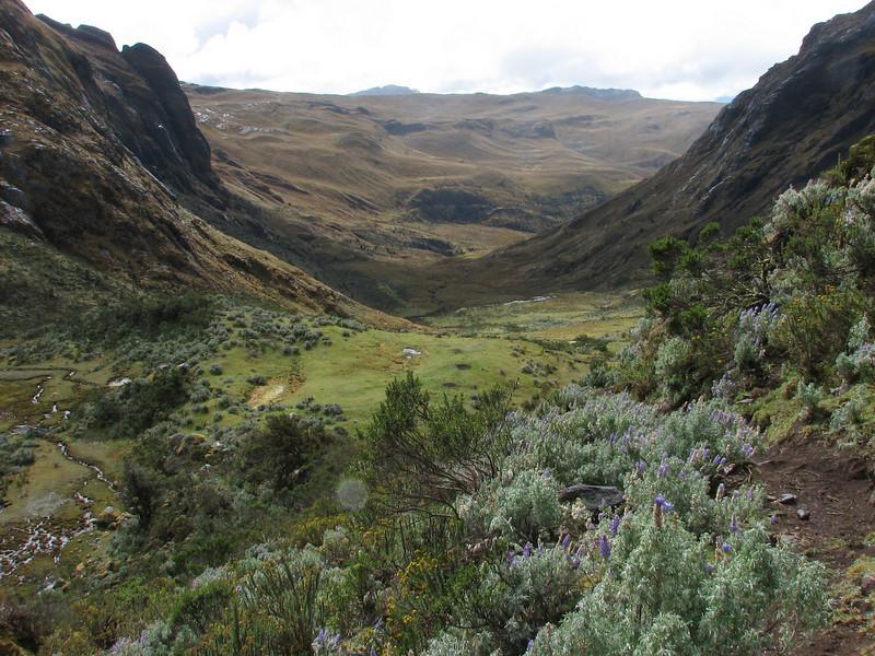 landscape between Tuctupampa 4100m - Alto de Pacarju 4650m (pass) - Ingeno 4000m
