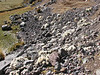 Austrocylindropuntia floccosa, Upispampa 4450m-Ararapass 4770m