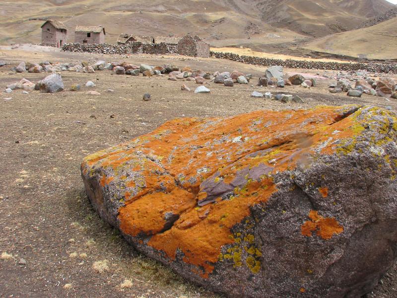 Caloplaca spec.<br /> Auzangate Cocha 4670m-Palomapass 5130m-Cerro Puca Punta 4480m-Tecla Cocha 4800m