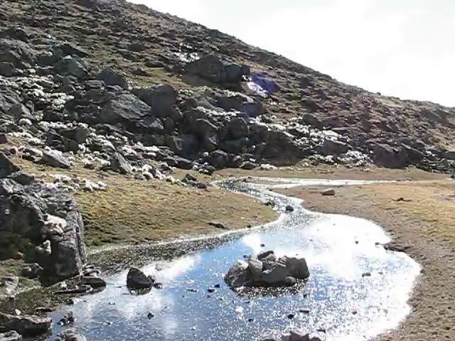 Film, Habitat of Austrocylindropuntia floccosa near Pacchanta 4300m.