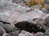 Lagidium peruanum (2x) (Vizcacha until 5000m) Teclla cocha 4800m.