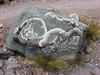Parmelia spec. (Lichen)