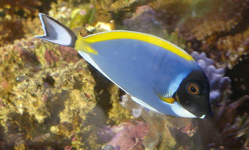 Sundry Fish