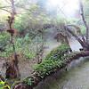 dead tree in swamp