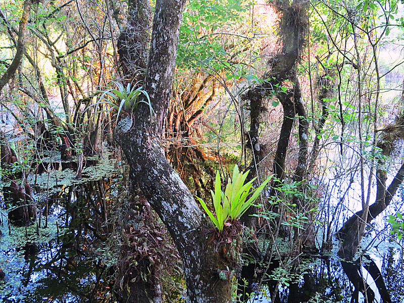 tree and swamp