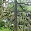 Rain Forest Sanctuary, Ketchikan,  Alaska