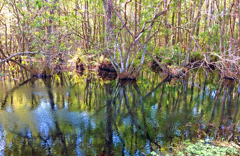 trees and swamp