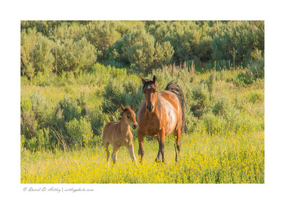 Foaling time, Piceance East Douglas Wild Horse Management Area, CO