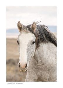 Wild Horse, Sand Wash Basin, Colorado