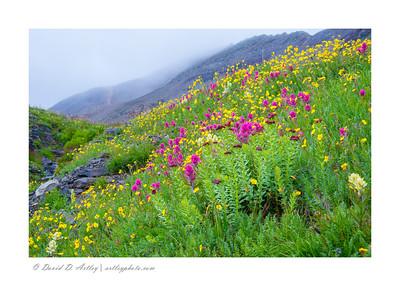 Wildflowers, Minearal Basin, near Silverton, CO
