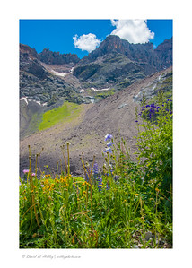 Wildflowers along Blue Lakes Trail, Mt. Sneffels Wilderness, near Ridgway, CO