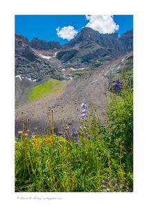Wildflowers along Blue Lakes Trail, Mt. Sneffels Wilderness, near Ridgway, CO